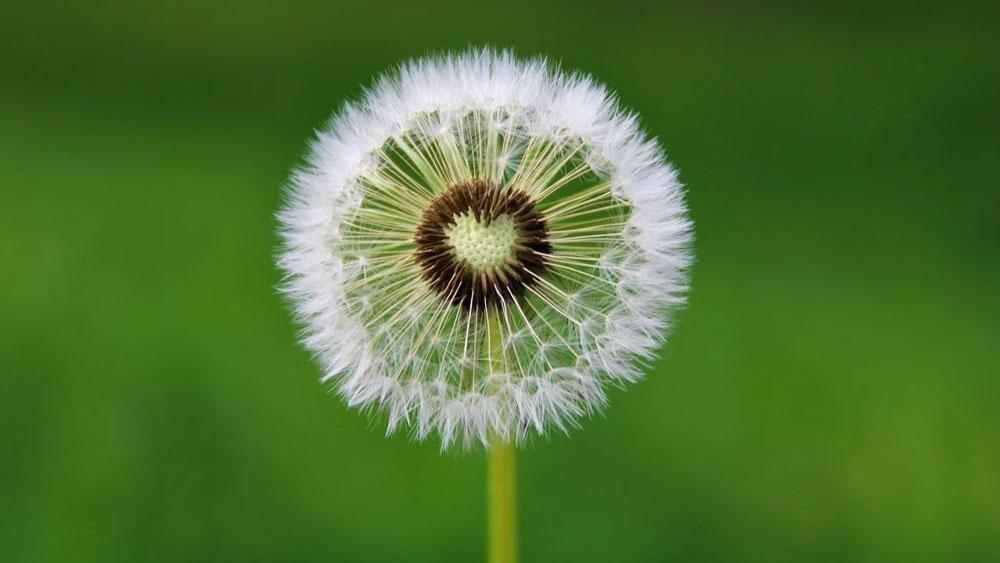 ciclo ormoni e desiderio